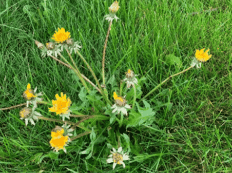 Killing Weeds: Identify the Weed