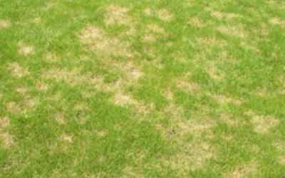 Contender's Tree & Lawn Specialists - Dollar Spot