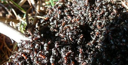 Spider & Ant Control