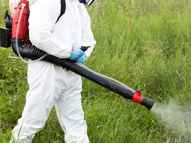 Professional Lawn Weed Treatment