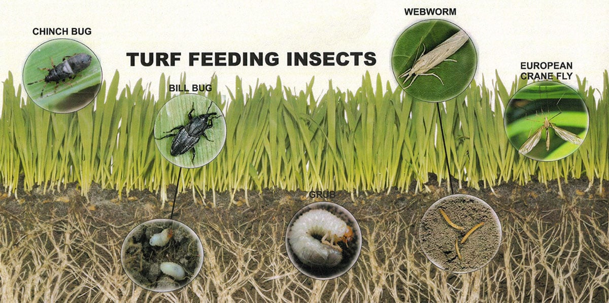 Contender's Tree & Lawn Specialists - Turf Feeding Insects